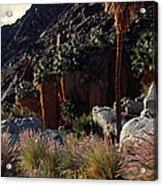 Plants On Landscape, Anza Borrego Acrylic Print