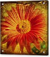 Plastered Petals Acrylic Print