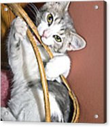 Playful Kitten Acrylic Print