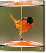 Pole Dancer Acrylic Print