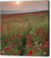 Poppy Field Landscape In Summer Countryside Sunrise Acrylic Print