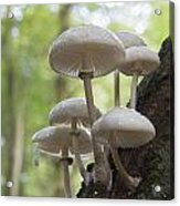 Porcelain Fungus Acrylic Print