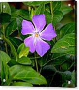 Pretty Purple Pinwheel Acrylic Print