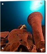 Prickly Tube-sponge And Tropical Reef In The Red Sea. Acrylic Print