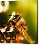 Process Of Pollination Acrylic Print