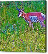 Pronghorn Among Wildflowers In Custer State Park-south Dakota Acrylic Print