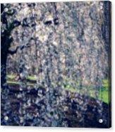 Prunus Subhirtella 'pendula' Acrylic Print