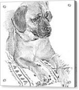Puppy On A Blanket Pencil Portrait Acrylic Print