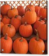 Pumpkins On Pumpkin Patch Acrylic Print