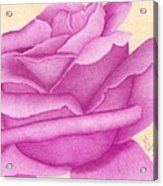 Purple Organdy Rose Acrylic Print