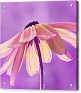 Purple Soft Acrylic Print