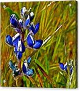 Pygmy-leaved Lupine In Antelope Valley Poppy Preserve-california Acrylic Print