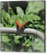 Question Mark Butterfly Acrylic Print