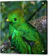 Quetzal Acrylic Print