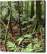 Rain Forest Acrylic Print