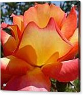 Rainbow Sorbet Rose Close Up Acrylic Print by Denise Mazzocco
