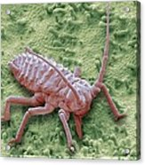 Raspberry Aphid, Sem Acrylic Print by Science Photo Library