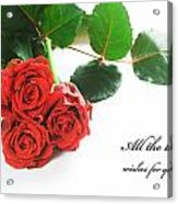 Red Fresh Roses On White Acrylic Print
