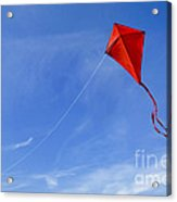 Red Kite In The Sky Acrylic Print
