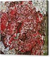 Red Lichen  Acrylic Print