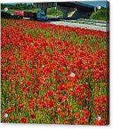 Red Poppy Field Near Highway Road Acrylic Print