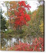 Red Tree Acrylic Print by Margaret McDermott