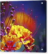 Red Yellow Blossoms 10197 Acrylic Print
