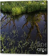 Reflection Acrylic Print
