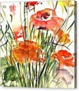 Renoncules Acrylic Print