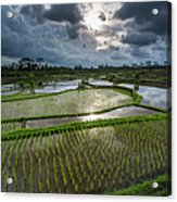 Rice Terraces In Central Bali Indonesia Acrylic Print