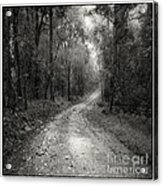 Road Way In Deep Forest Acrylic Print