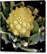 Romanesco - Italian Broccoli Acrylic Print
