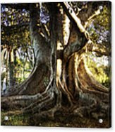 Roots Acrylic Print by George Lenz