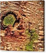 Roots Of A Money Tree Acrylic Print