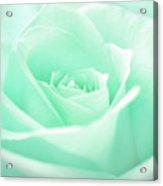 Pale Green Rose Acrylic Print