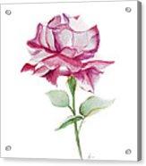 Rose 2 Acrylic Print by Nancy Edwards
