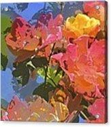 Rose 208 Acrylic Print