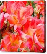 Rose 303 Acrylic Print