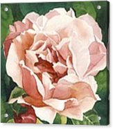 Rose In Pink Acrylic Print