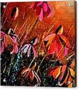 Rudbeckias  Acrylic Print
