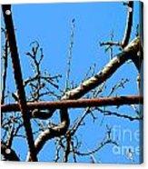 Sagamihara Asamizo Park 17c Acrylic Print