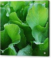 Santoro Lettuce 2 Acrylic Print