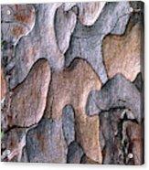 Scots Pine Bark Abstract Acrylic Print