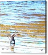 Sea Bird Acrylic Print