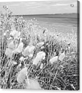 Seaside Grass Acrylic Print