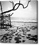 Shadow Tree Acrylic Print