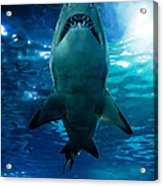 Shark Silhouette Underwater Acrylic Print