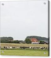 Sheep Dike In Arnhem Acrylic Print