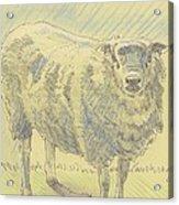 Sheep Sketch Acrylic Print
