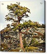 Sierra Landscape Acrylic Print